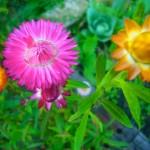 Le jardin à la mi octobre