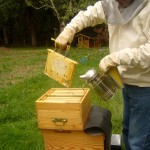 La fin de semaine avec les abeilles