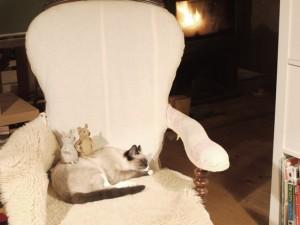 les souris s'amusent pendant que le chat dort
